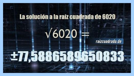 Solución obtenida en la resolución operación raíz cuadrada de 6020